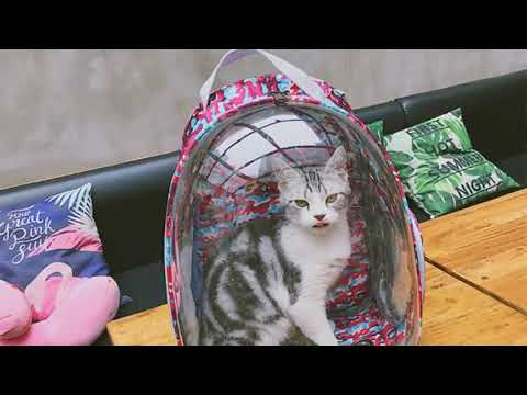 Portable Pet Puppy Bag Outdoor Travel Carrier Backpack Cat Dog Space Capsule Breathable-in Backpa…