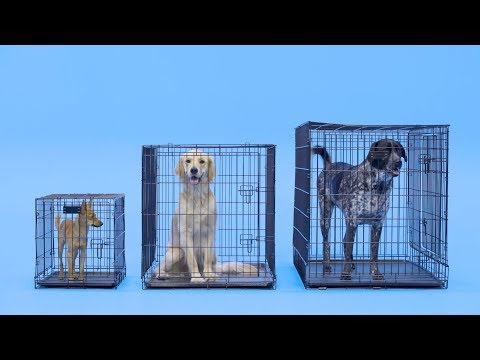 How to Find the Right Size Crate for Your Dog | Chewy