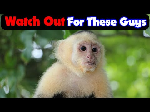 Manuel Antonio National Park Costa Rica- SMART TIPS for New Travelers