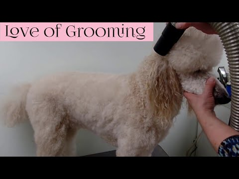 Drying Techniques – Cage/Crate/Kennel Drying – Stretch/Fluff Drying – Hi-Velocity Drying