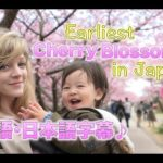 【Japan Family Trip】Earliest Cherry Blossoms in Japan♪~Kawazu Sakura Festival 2020~